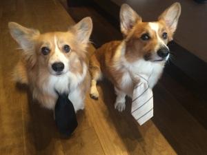 用済みネクタイ。